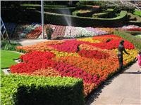 GoSeeAustraliRoma St gardens ablaze with colour