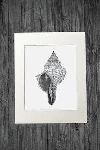 Shell Print