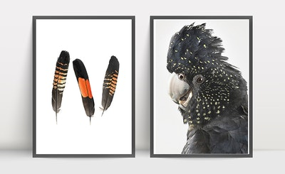 Print Set: Ruby and Feathers