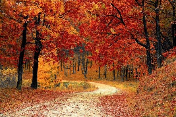 Equestrian Wellness: Your Fall Nourishment Roadmap