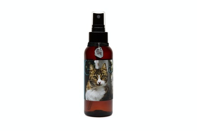 Kitty Kitchen Rehome Feline Botanical Mist