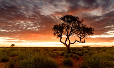 Navigating the Red Centre
