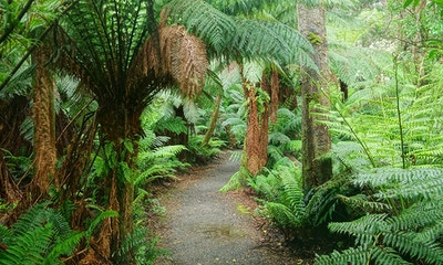 Tarra Bulga – Gippsland's hidden world of green
