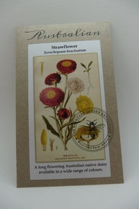 Backyard Garden Enthusiast Strawflower, Xerochrysum bracteatum