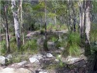 Grass trees add to the bush mystery of this Cania scene