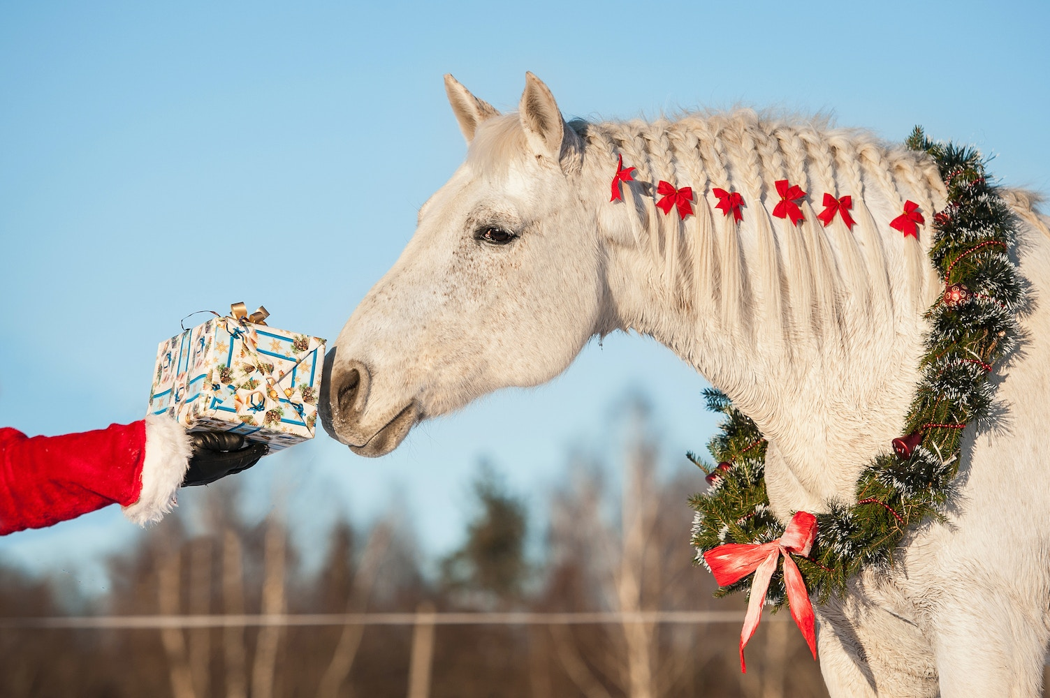 What Your Horse Wants For Christmas