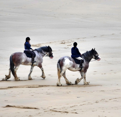 winter_horse_riding_tips_4_480x480-png