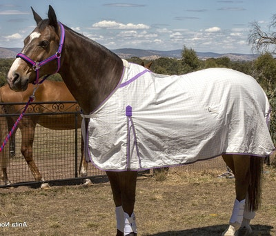 Capriole Equestrian Purple & Lime Green Summer Rug