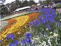 Quirky, colourful Canberra events turn Spring into Australia's BIG celebration
