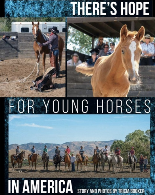 USHJA In Stride: There's Hope For Young Horses In America