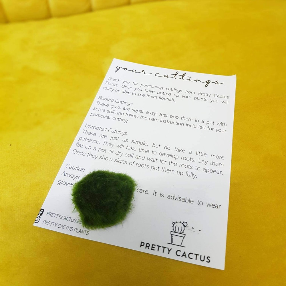 Pretty Cactus Plants  Marimo Moss Ball - Aquatic Plant From Japan - Makes A Unique Gift