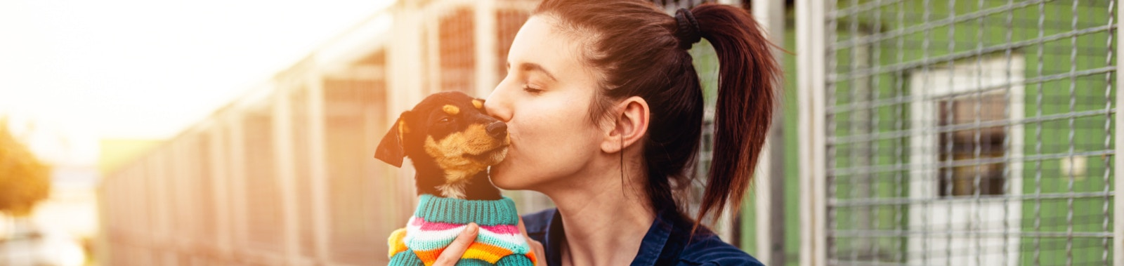 What To Know About Rescue Dogs