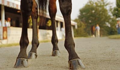 horse-legs-racehorse-png