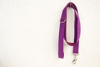 Barker & Bone Dog Leash | Purple