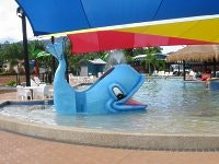 Whale watching at Cairns Coconut Caravan Park