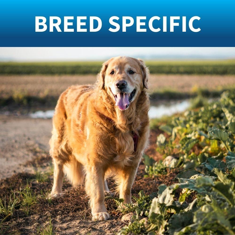 shop breed specific dog food royal cannin