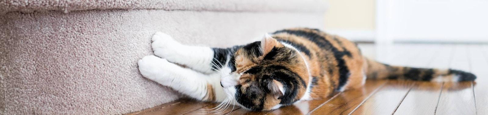 Common Cat Behaviour Issues