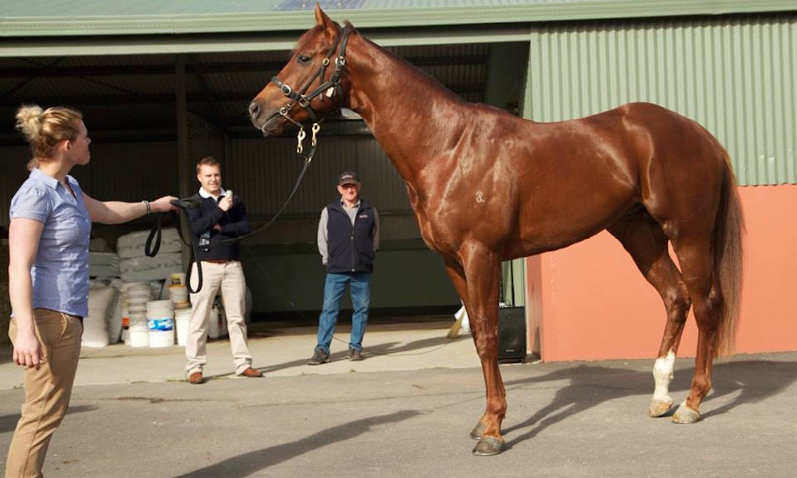 The Ultimate Horse Lovers Experience - Spicer Thoroughbreds New Zealand Tour