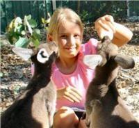 Peel Zoo WA aid program aims to end cruelty to animals through hands-on kangaroo rehabilitation interaction