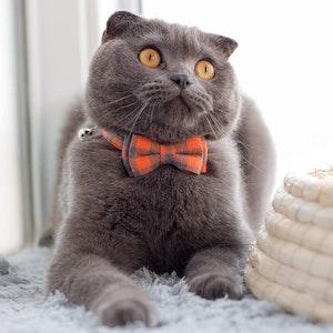 Queenie's Pawprints Kitty Bowtie Cotton Plaid Collar in Orange