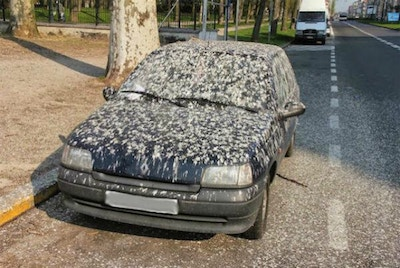 11 Things That Will Damage Your Car Paint
