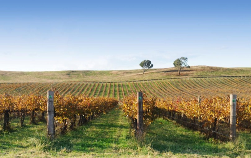 Mudgee wine region