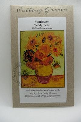 Backyard Garden Enthusiast Teddy Bear Sunflowers, Helianthus annuus