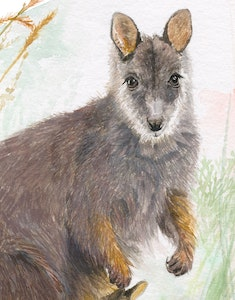 Mother and Joey Fine Art Print