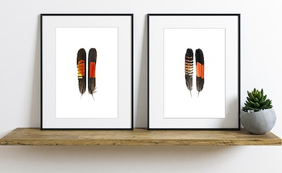 Print Set: Glossy and Red-tailed Black Cockatoo Feathers