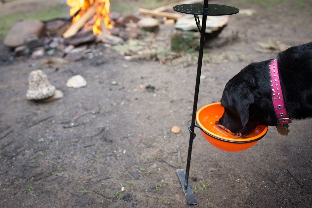 Aussie outdoor mates   creative ways to use your drink mate   dog mate