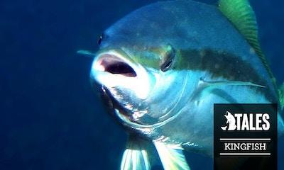 Fishing Tales - Kingie Wrestling