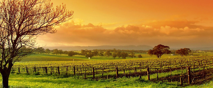 cellarspace-barossa-valey-blog-img1-png