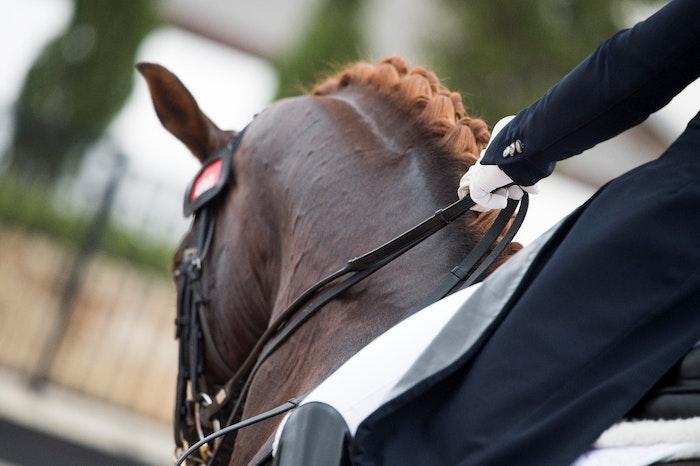 dressage-horse-jpg