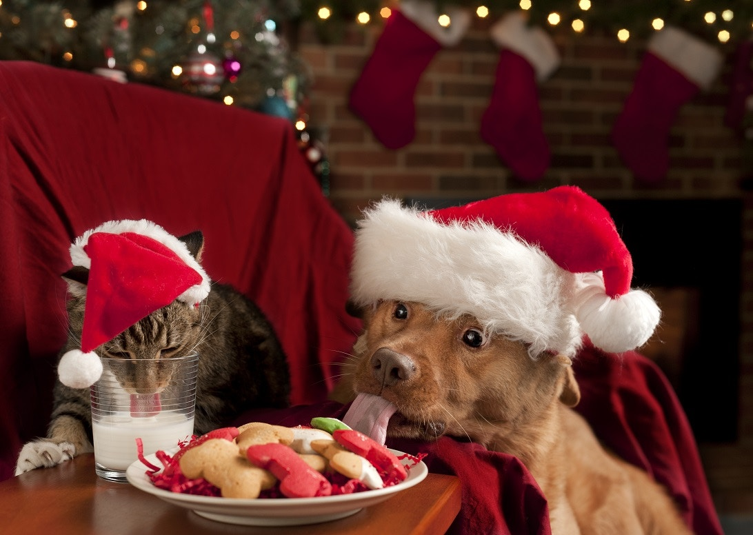 Great Christmas Gifts for Pet Lovers