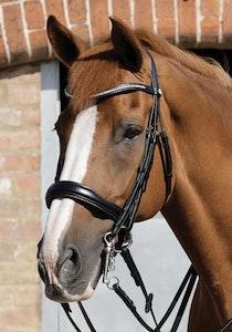 Premier Equine Abriano Anatomic Double Bridle