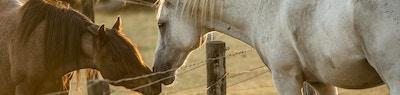 Understanding Horse Body Language