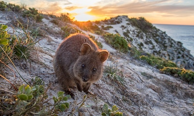 Rottnest Island Day Trip: a nature lover's guide