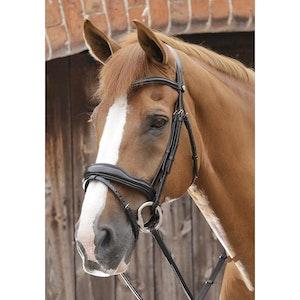 Premier Equine Favoloso Anatomic Bridle