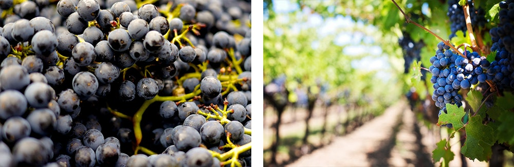 grapes-jpg
