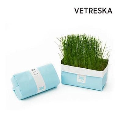 VETRESKA® Cat Grass Soilless Seeds Green Foxtail   Ryegrass   Blue