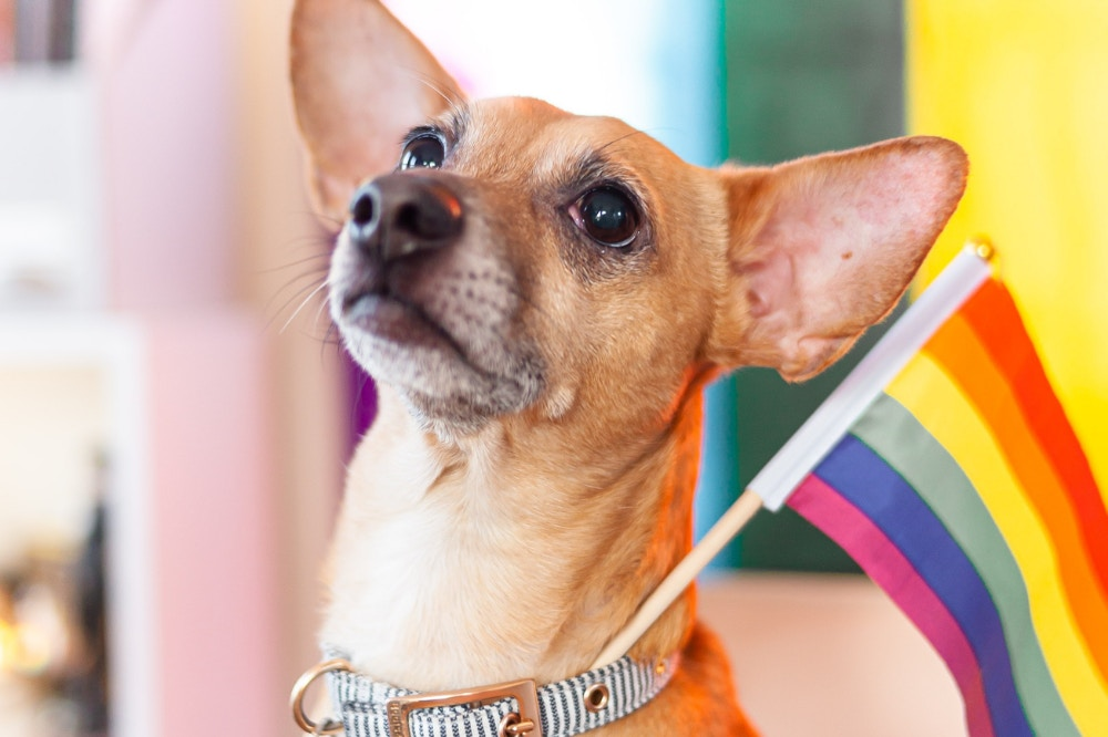 Pet Pride & Caring For Your Pet At Petmarket