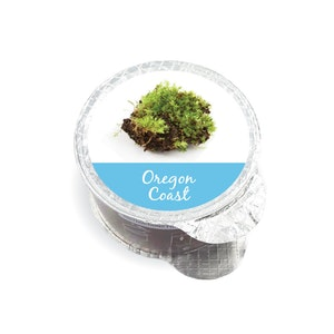 mojilife Australia Oregon Coast Fragrance Pod