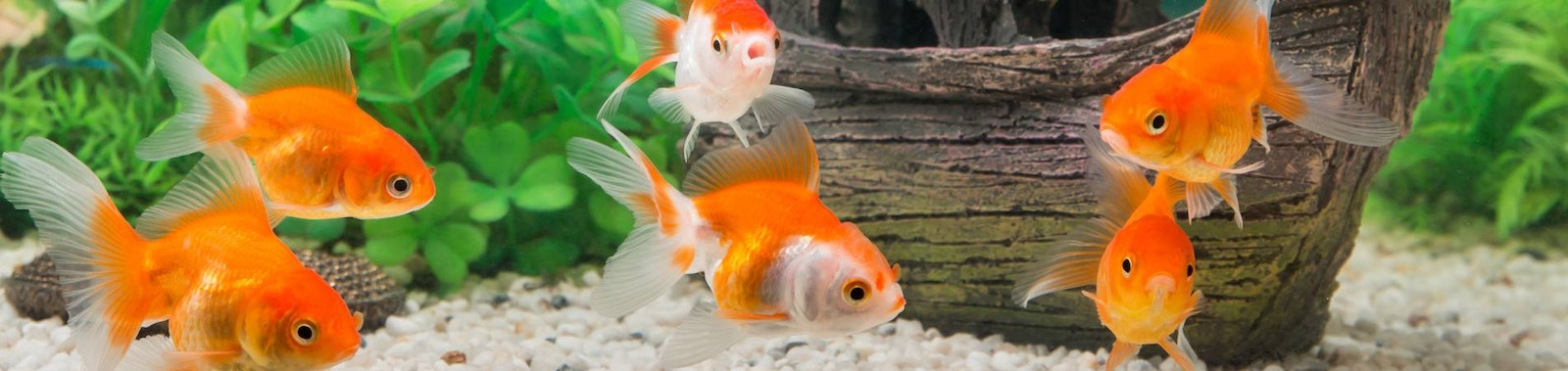 Tips for Maintaining Your Fish Tank