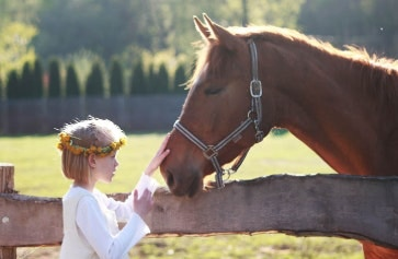 Everything You Need To Know About Insuring Your Horse