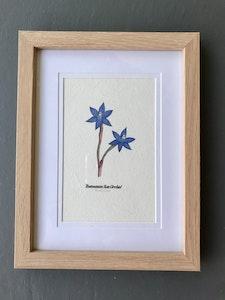 "Art'N Green Tasmanian Orchid Art Print - A6 Print on Cordyline Handmade Paper, Framed 4x6"" Oak-like."