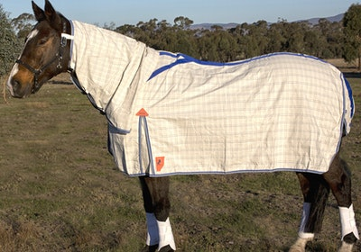 Capriole Equestrian Deluxe Grey & Royal Blue Summer Combo