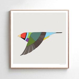 Gouldian Finch In Flight