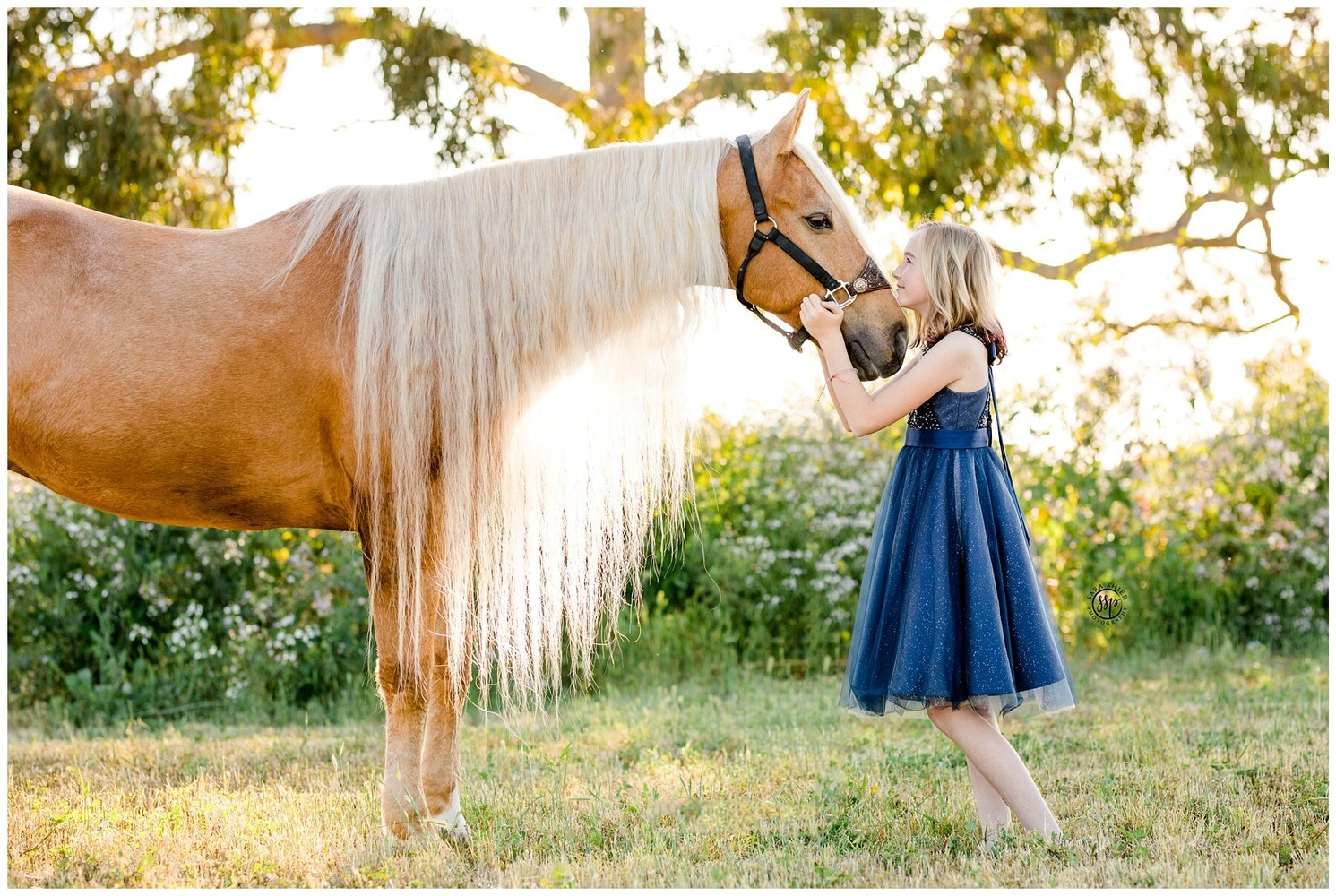 Sara Shier Photography: 5 Planning Tips For Your Horse + Rider Shoot From A Photographer's Perspective