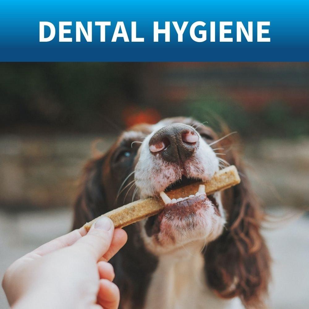 shop dog toothbrushes