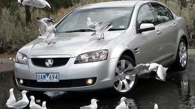 Thank God Cows Can't Fly - The Truth about Bird Poo
